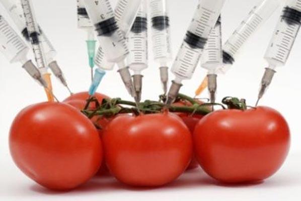 Pomodori OGM contro il cancro