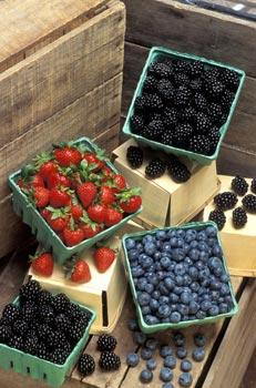 Dai frutti di bosco uno «scudo» naturale contro il Parkinson