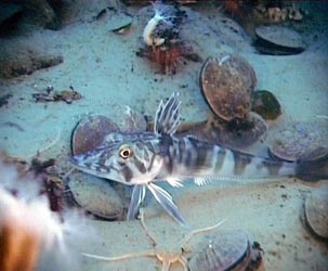 Pesci robot al Mediterraneum di Roma