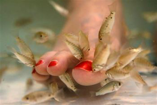 Fish pedicure. Epatite? No, grazie