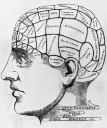 brain-phrenology-022013-lg