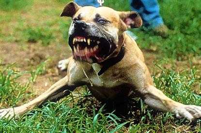 Cani aggressivi, un'altra ordinanza in  attesa della legge Lorenzin