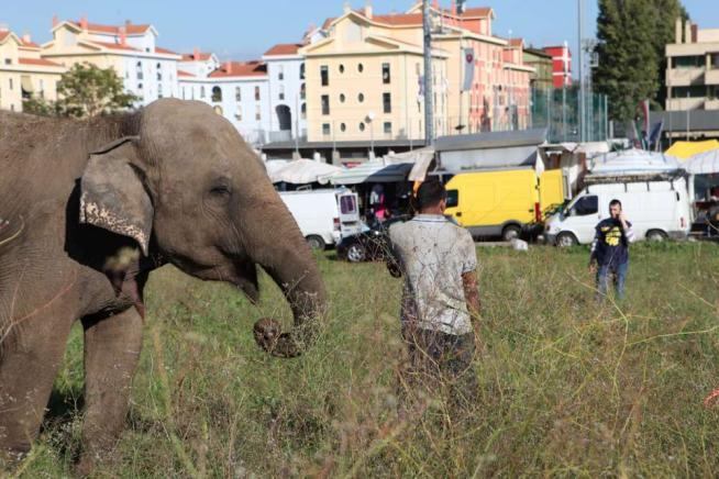 elefante-roma