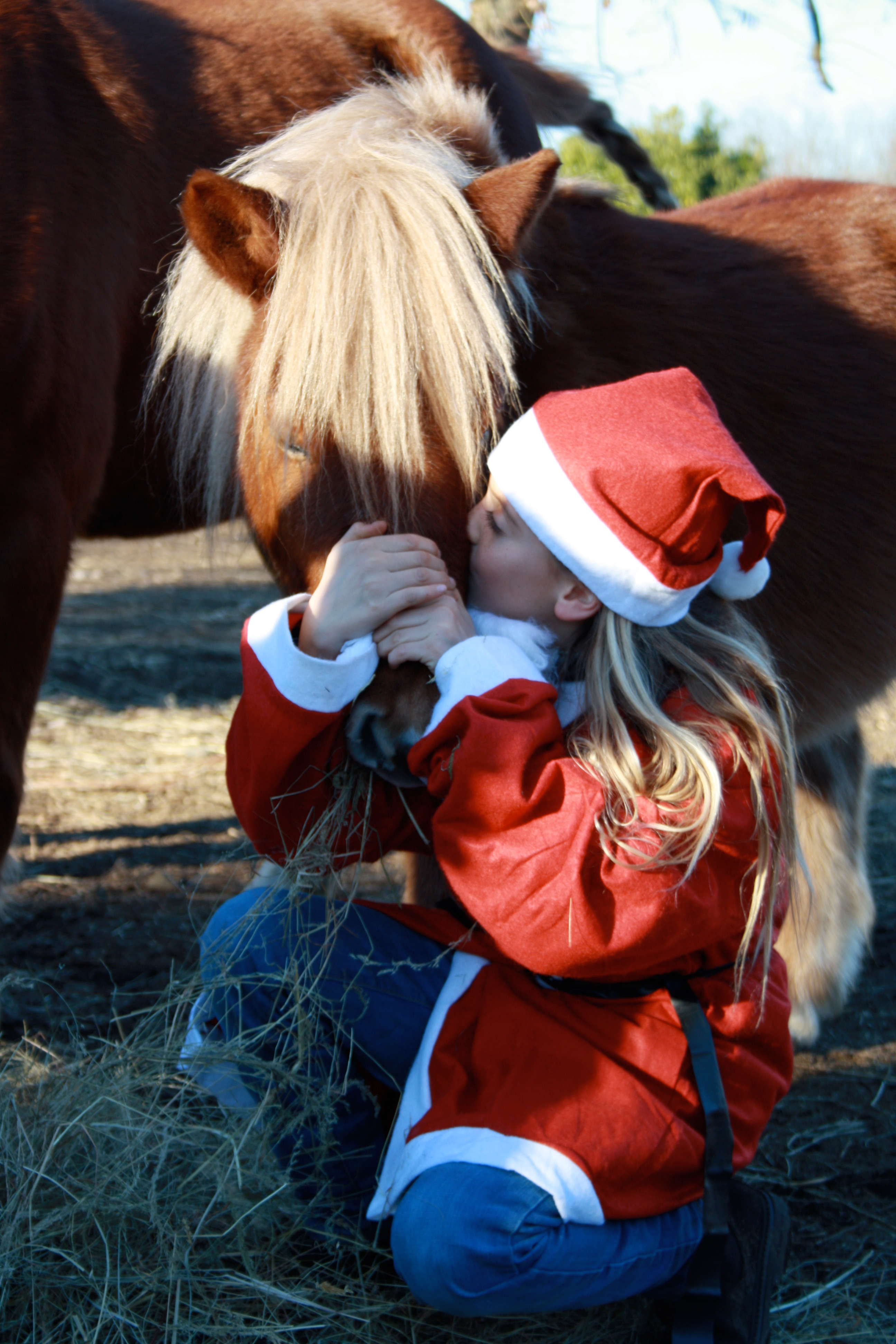 La proposta: Natale a cavallo con il camp La Bastide