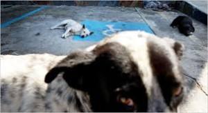 animali-maltrattati