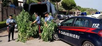 Un sequestro di cannabis