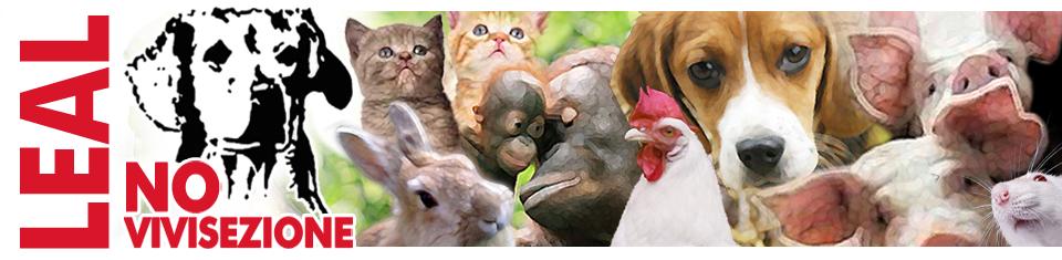 Maltrattamenti animali, ecco i numeri del dramma