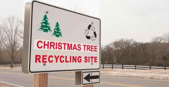 Roma, ricicla l'albero per un Natale eco-compatibile