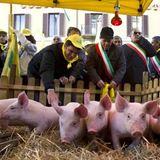 Made in Italy, allevatori a Istituzioni: