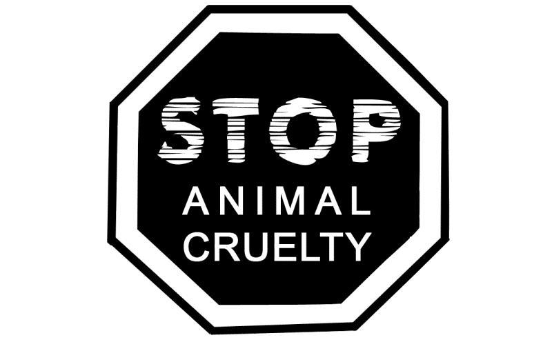 Giornata dei diritti degli animali, sabato eventi in tutta Italia