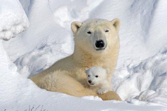 orsi-bianchi-203