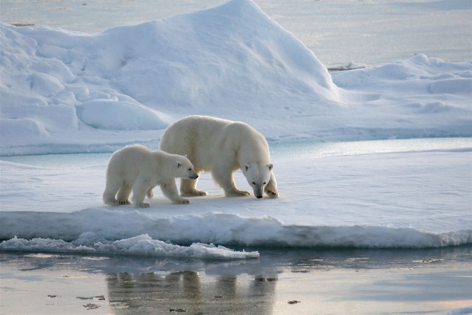 Artico: oltre 10mila anni fa presenti piante ricche di proteine