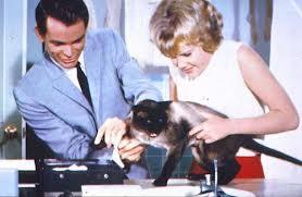 fbi-operazione-gatto
