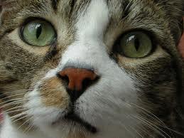 Il gatto, questo sconosciuto