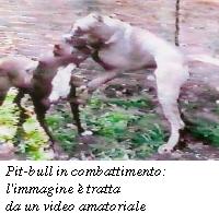 Rapiti nel 2013 in Italia 17.500 cani. Il business dei combattimenti