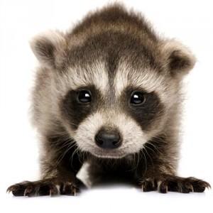 La Lombardia dice Stop agli allevamenti di animali per pellicce
