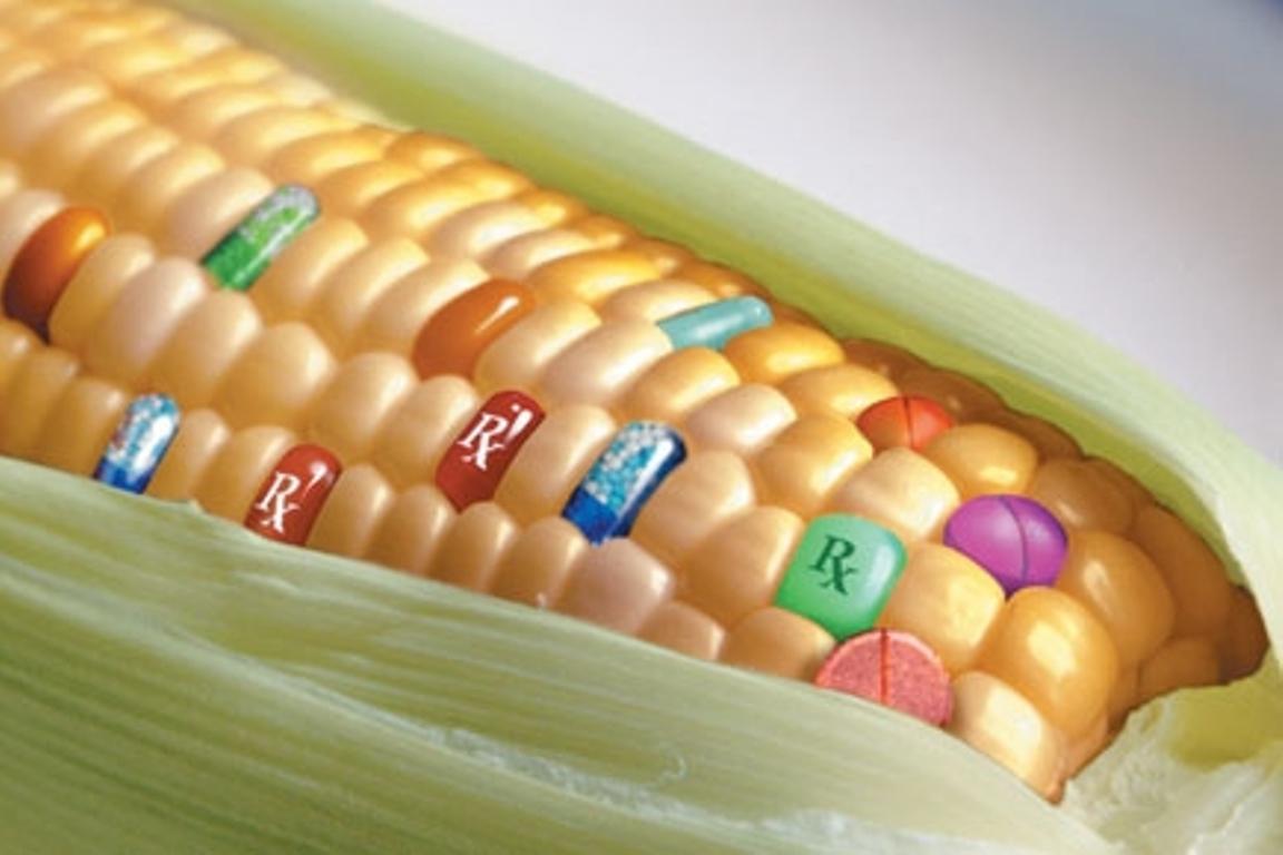 Sì agli OGM, se lo Stato vuole