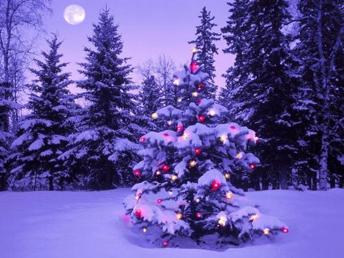 La crisi taglia l'albero di Natale. Anzi, l'accorcia