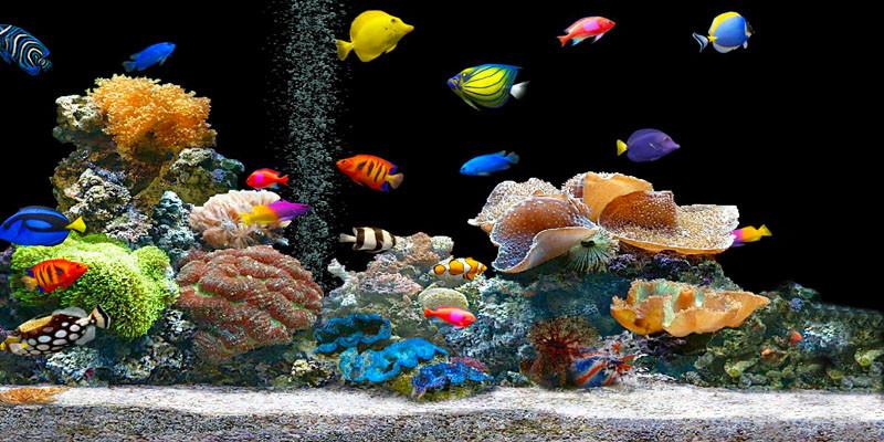 Pet therapy con i pesci: rilassano, abbassano pressione e battito cardiaco