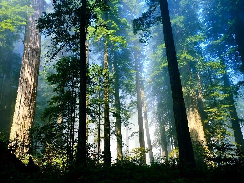Gli alberi sulla terra? Tre miliardi, 422 per ogni abitante