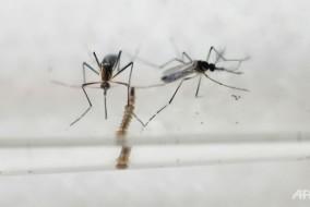 La-nuova-zanzara-zika