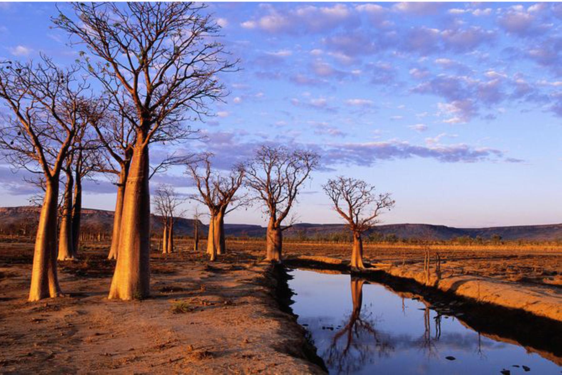 Clima: 'attacco di cuore' anche per gli alberi