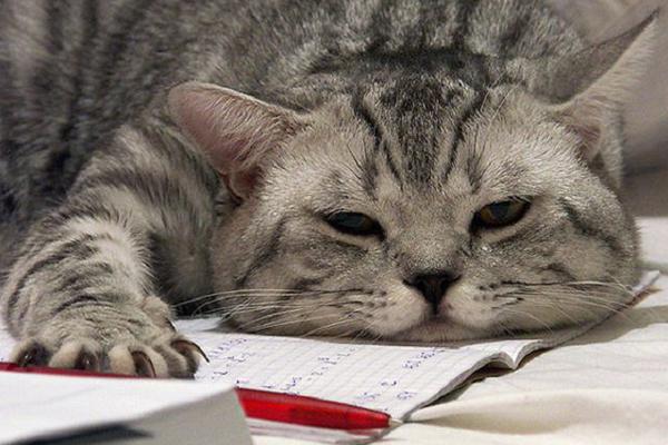 Australia: gatti in classe contro stress da esami