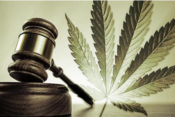 Cannabis, da Sanremo la proposta di una class action