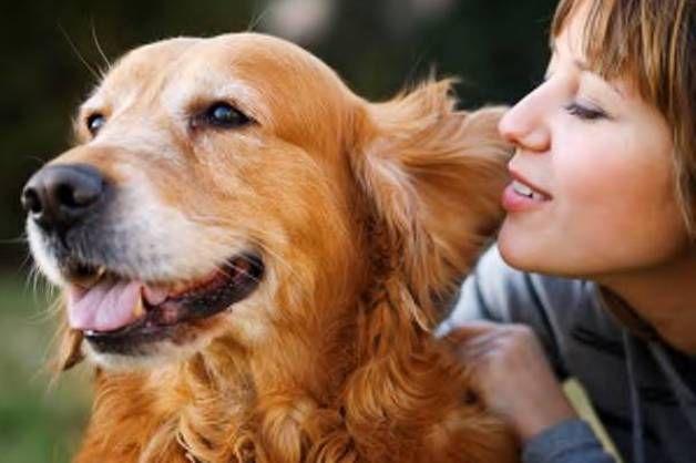 Cani: attenti a come si parla loro