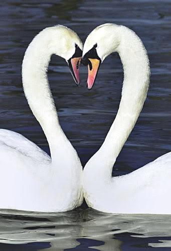 Amore a prima vista? Anche alla terza o alla quarta