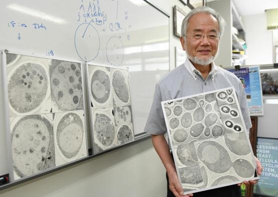 Nobel Medicina al giapponese Ohsumi