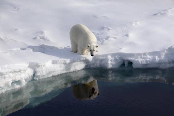 Allarme Clima: 2016 anno più caldo nella Storia