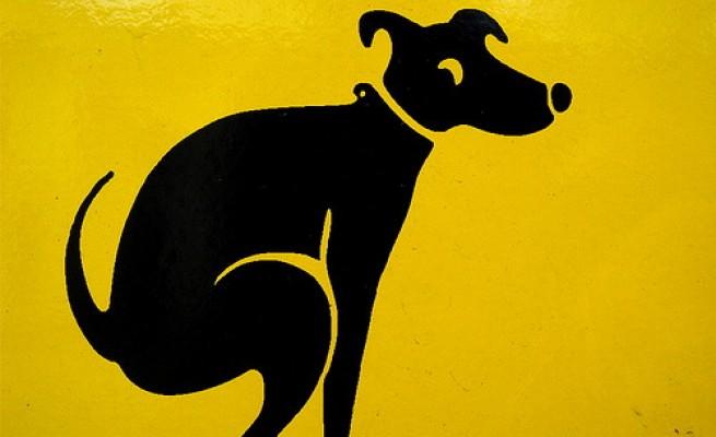Deiezioni canine: Dna incastrerà padrone sozzone