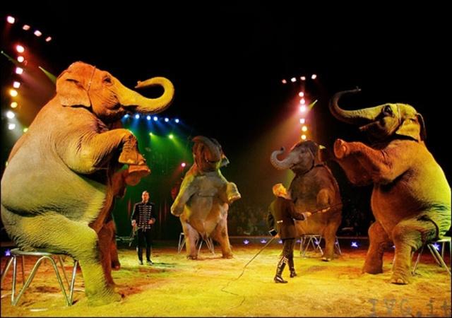 Censis, circo in crisi: meglio quelli senza animali