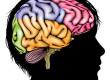 Cervello-colorato