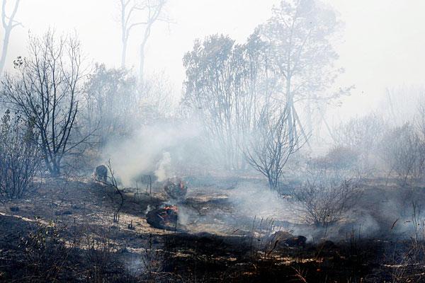 Incendi: 26 ettari di bosco in fiamme con danni incalcolabili