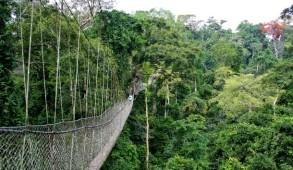 deforestazione in africa piantagioni cacao