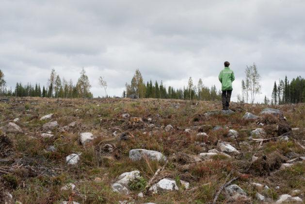 Fazzoletti di carta divorano la foresta del Nord Europa