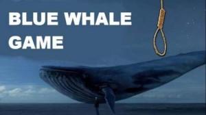 blu whale