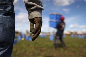 Istat, sommerso e illegale in calo nel 2015