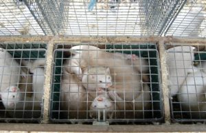 gabbie in cui si allevano animali da pelliccia