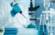 Embrione ibrido pecora-uomo creato in lavoratorio USA