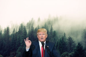 trump-forest