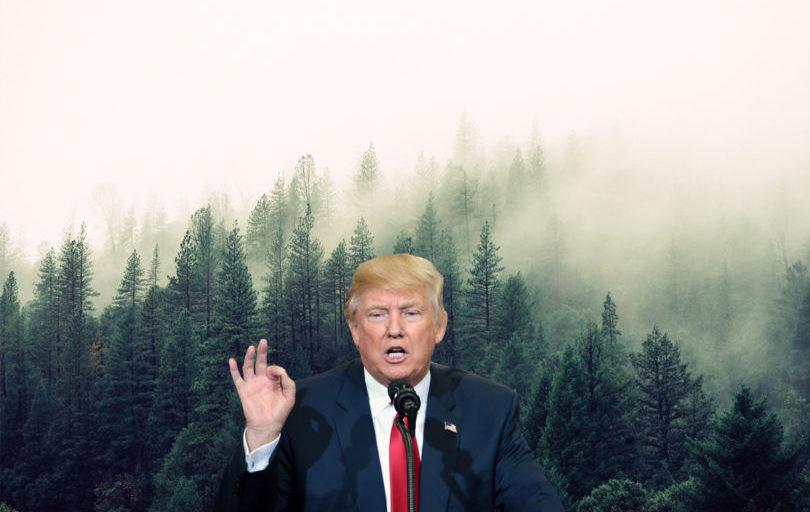 Trump Forest: 1mln alberi per dietrofront USA su clima