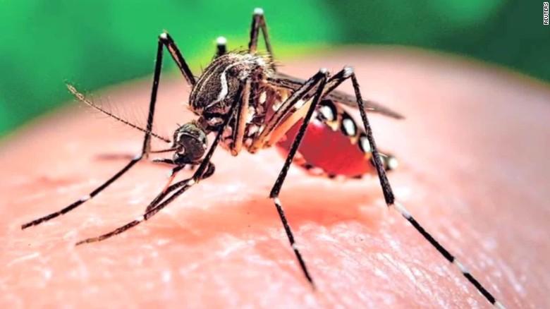Allerta zanzara: si teme diffusione Zika e febbre gialla