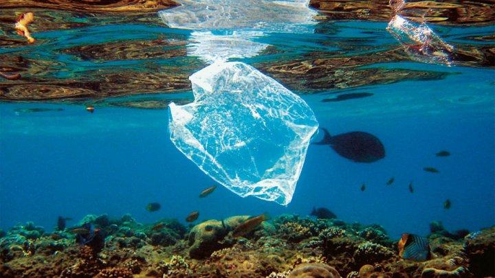 Sacchetti di plastica uccidono balena