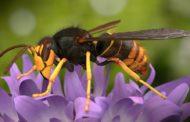 La scienza in aiuto delle api italiane