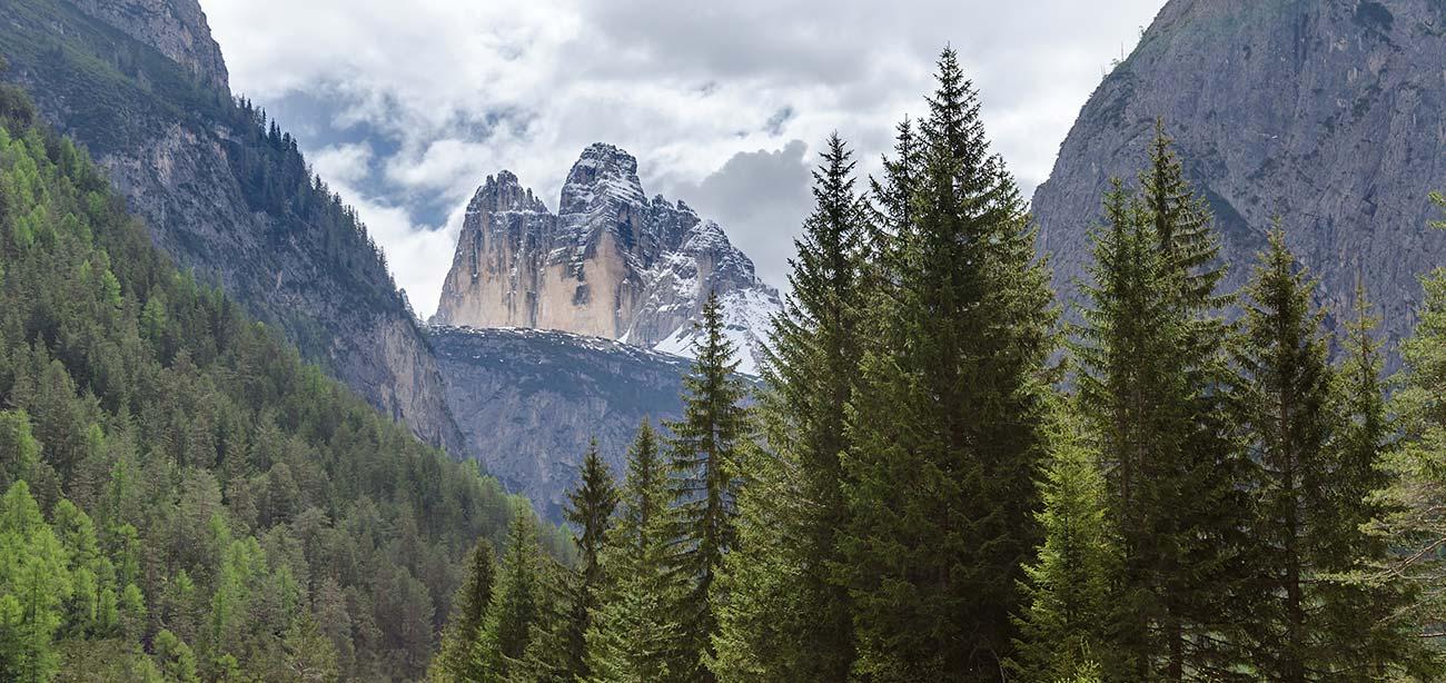 panorama-montagna-bosco-alberi-