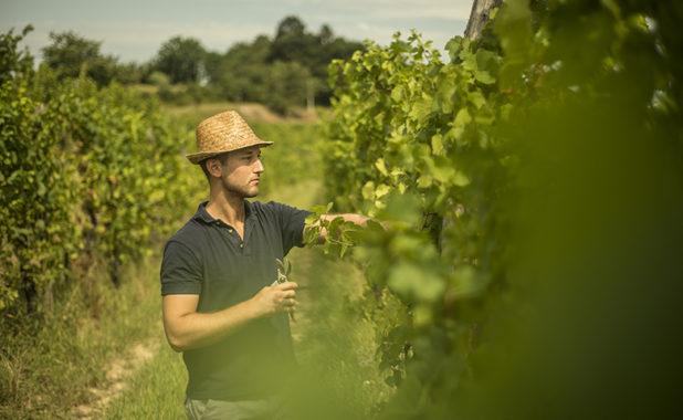 L'agricoltura del terzo Millennio, under 35 e con laurea