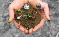 Le piante, in estinzione come gli animali. Anzi, il doppio